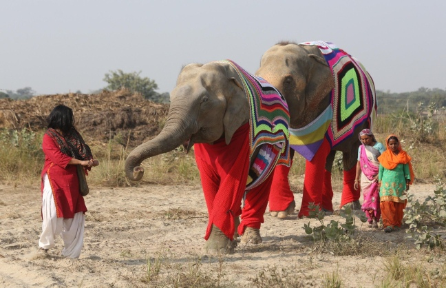 Rescued Elephants